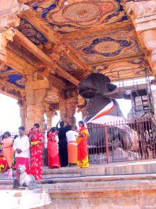 Nandi, Thanjavur, 2008